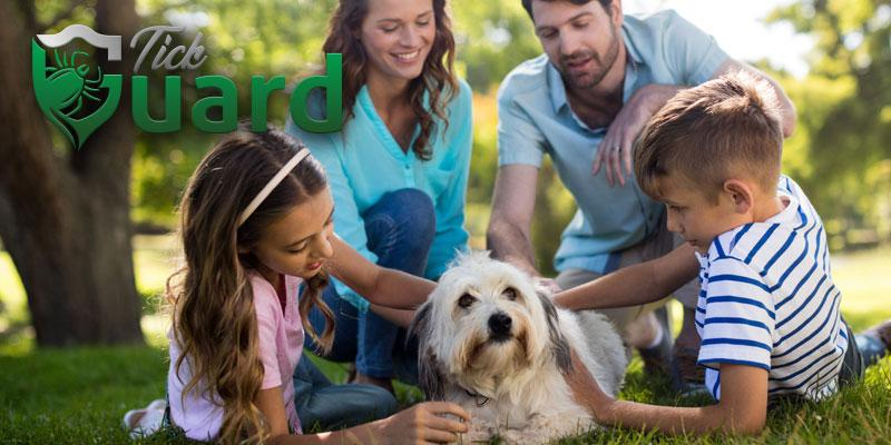 Family playing with dog outside
